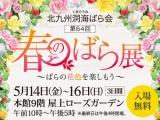 北九州洞海ばら会〈春のばら展〉〜ばらの花色を楽しもう〜