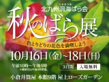 北九州洞海ばら会〈秋のばら展〉〜色とりどりの花色を満喫しよう〜