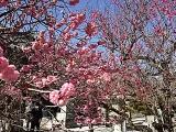 【女子ブログ】春を感じさせてくれる場所で癒されてきました