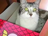 【女子ブログ】愛猫との幸せな日々に感謝です♡