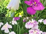 【女子ブログ】5〜6月の花と、夏に欠かせないアイテム